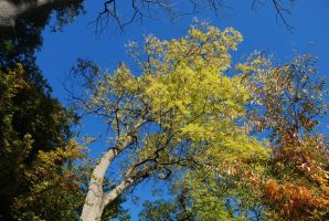 fall with tree by ToTMissarMis