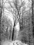 Winterforest by Caillean-Photography