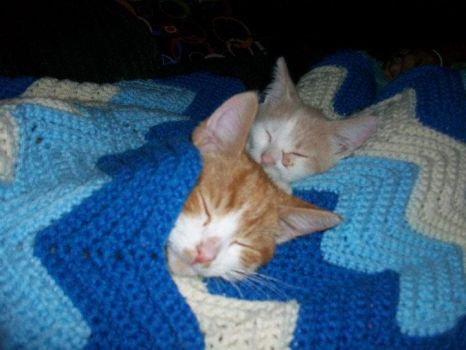 Two cute kittens sleeping together by Cupcakequeenwis