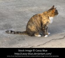 Cat Stock 9 by Cassy-Blue