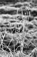 Ice and Grass by Nigel-Kell