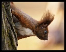 Mr squirrel 3 by Alexandra35