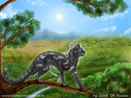 SkyClan by Spirit-Of-Alaska