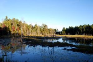 roadside swamps are lovely by elmiry
