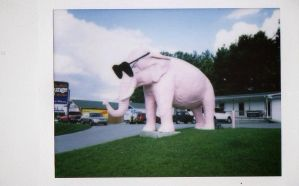 the pink elephant by robottriceratops