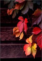 FALL LEAVES by THOM-B-FOTO