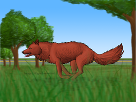 Red Wolf Re-do by Morgan-Michele