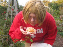 APH cosplay: Canada - rose by Kiri-Akurei