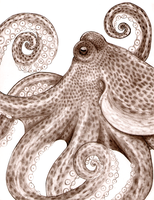 Octopus by LadyNoise