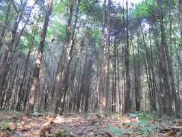 floor-view forest by oreolovers77