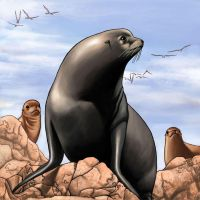 Silo_the Sea Lion by paragraphworld
