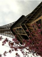 Paris - Tour Eiffel, Fleurs by Flash-clac