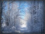 Winter in Canada 6 by artistmember