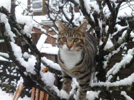 Kitten in the Snow by divinearchangel7