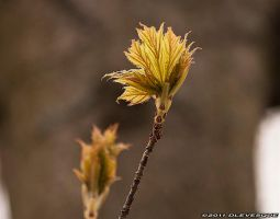 Spring Leaves by imonline