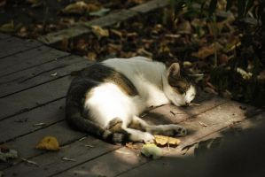 Sleeping cat by alina0
