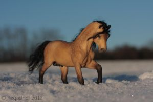 Wintersun by PegasusCreations