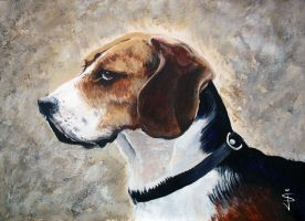 Beagle by NorthumbrianArtist
