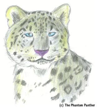 Snow Leopard by phantompanther