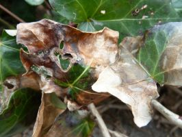 dying leaf texture 4 by density-stock