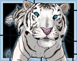 White Tiger!!!! by SearraLee