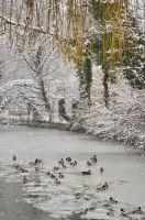 Duck pond during winter by SpaZzochka