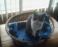 My cat 1: Benji by Cellas