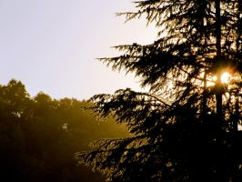 Sunset behind trees by CHritzel
