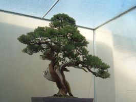 Bonsai 016 by aurochstock