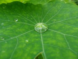 Raindrop Leaf by Fritsa-Wolf