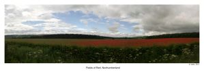 Fields of Red by Nine80
