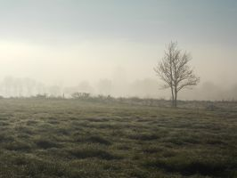 Foggy Morning Stock 1 by SpioradAisce
