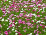 Cosmos Carpet by larksgar