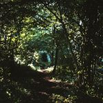 forest track by mathias-erhart