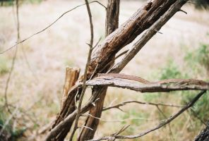 Broken Branches by Chris01125