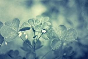 lonely drop. by Altingfest