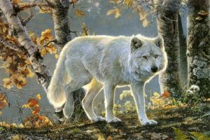 The Lone White Wolf by TheOfficialScourge