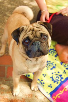 I Pug You .................... by Yuffie1972