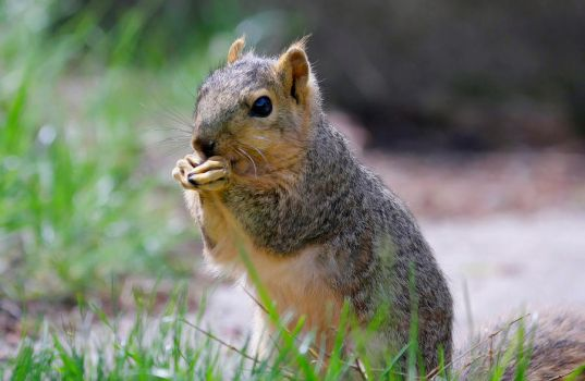Just a squirrel by LakeFX