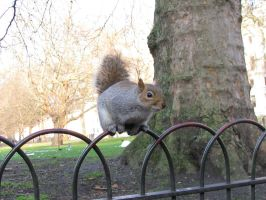 Animals 091 squirrels by Dreamcatcher-stock