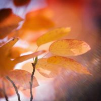 Autumn painting... by MartaC