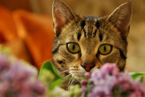 cats like lilac II by Wilithin
