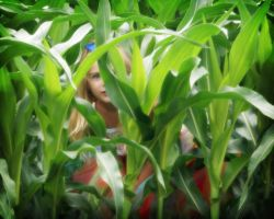 Hiding in the Corn by tragica1