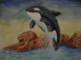 orca time by Sciggles