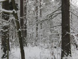 winter forest by AlenaKrause