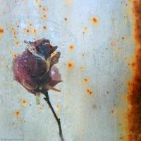 rusted melancholy. magnolia. by Migrena