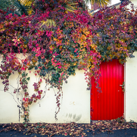 Red Door Fall 2 by Pierre-Lagarde