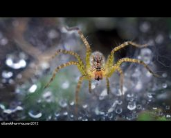 Spider! by allanddharmawan