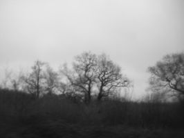 dark trees by NaturalWales