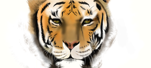 Tiger by Maheen-S